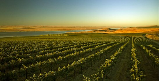 Beautiful photo of vinyard